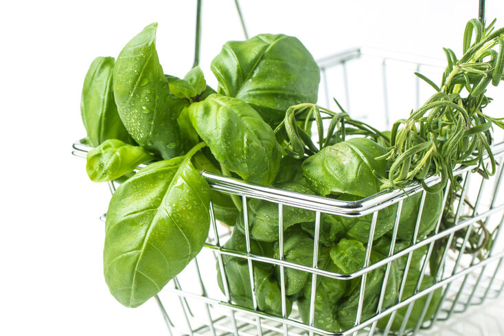 Basil is a potent natural antibacterial herb